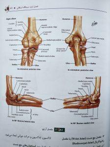 مفصل آرنج ( آناتومکی عمومی شمایلی یگانه )