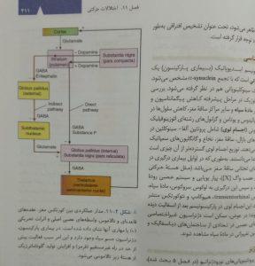 مدار عملکردی بین کورتکس مغز، عقده های قاعده ای و تالاموس.