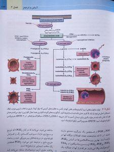 تولید متابولیت های اسید آراشیدونیک
