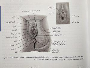 ساختار های ولو ( بارداری و زایمان ویلیامز جلد اول )