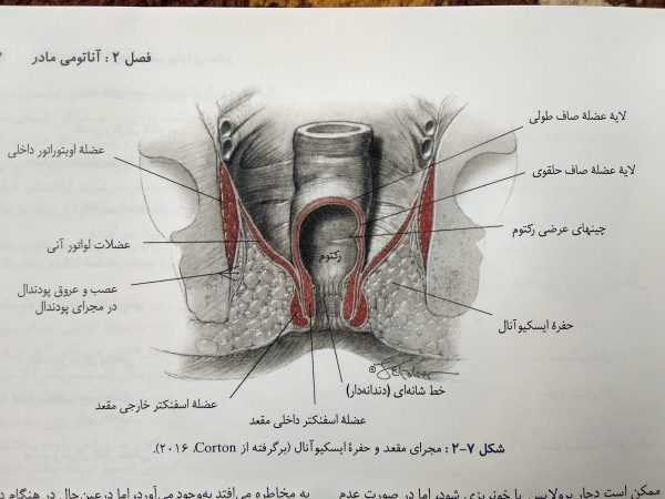 مجرای مقعد و حفره ایسکیوآنال (بارداری و زایمان ویلیامز جلد اول )