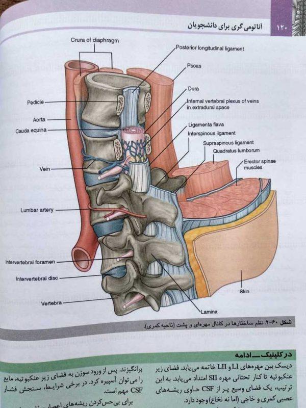 نظم ساختار ها در کانال مهره ای