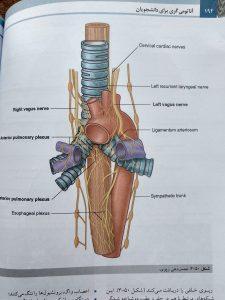 عصب دهی ریوی (آناتومی گری تنه جلد اول 2020 )