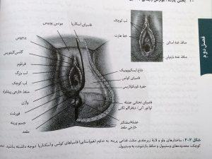 ساختار ولو ( خلاصه ویلیامز سه جلدی گلبان )
