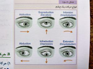 انواع حرکات یک چشم