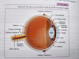 موقعیت شبکیه و حد قدامی آن ( abc چشم )
