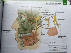 اعصاب مغزی و عصب دهی پاراسمپاتیک (آناتومی گری سر و گردن جلد سوم 2020)
