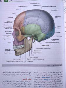 نمای خارجی جمجمه( آناتومی گری سر و گردن جلد سوم 2020 )