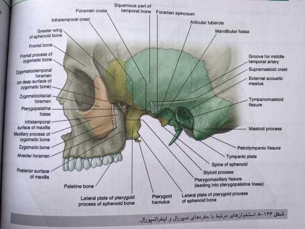 آناتومی گری سر و گردن جلد سوم 2020