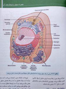 سلول تیپیک ( فیزیولوژی پزشکی گایتون جلد اول )