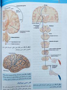 سیستم عصبی ( فیزیولوژی پزشکی گایتون جلد دوم )