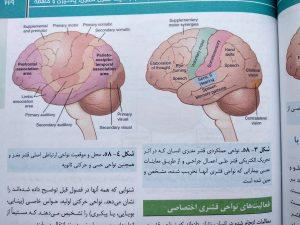 نواحی عملکردی قشر مغزی (فیزیولوژی پزشکی گایتون جلد دوم )