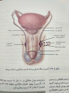 دستگاه تناسلی مردانه ( بارداری و زایمان ویلیامز جلد دوم )