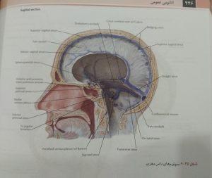 سپتوم های داس مغزی (آناتومی عمومی دکتر شیرازی)