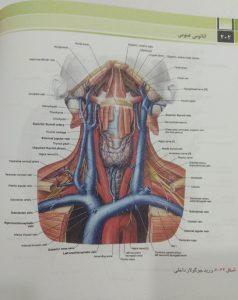 ورید جوگولار داخلی (آناتومی عمومی دکتر شیرازی)