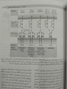 پروتئین های خانواده های B7 و CD28