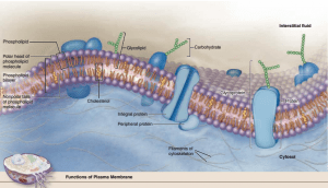 پروتئین های غشایی ( بافت شناسی جان کوئیرا ترجمه دکتر حسن زاده )