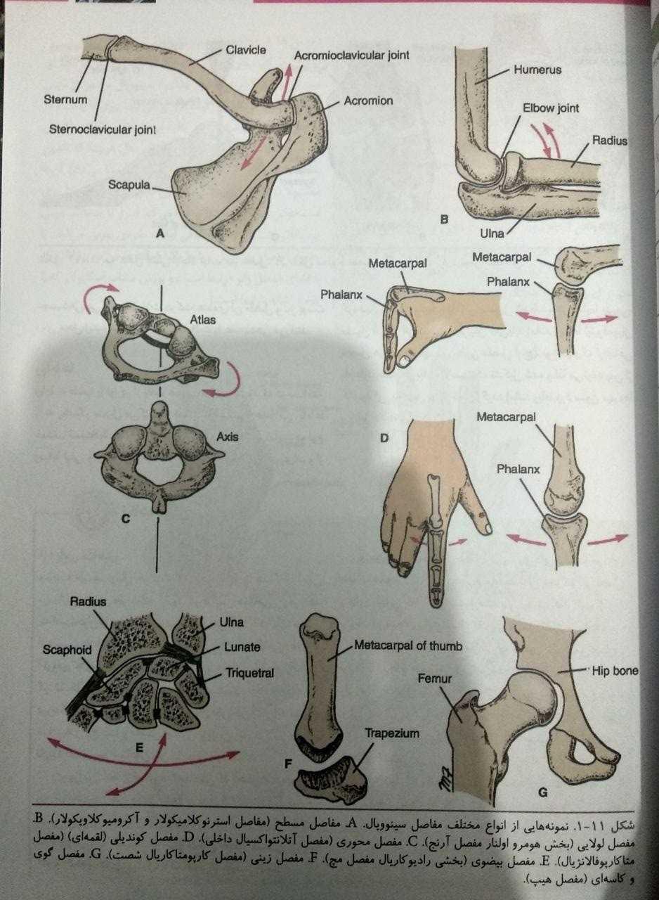 نمونه هایی از انواع مختلف مفاصل سینوویال