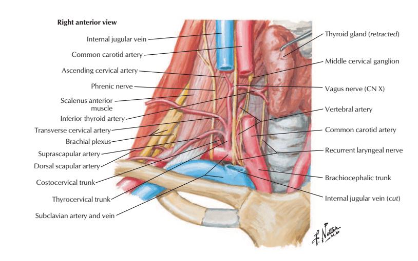 اطلس آناتومی نتر 2019 ( به همراه pdf اورجینال)