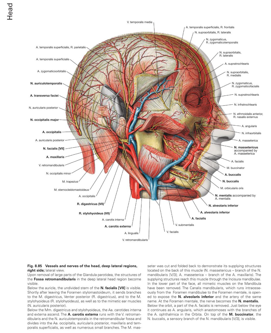 کتاب اطلس آناتومی زوبوتا 2018