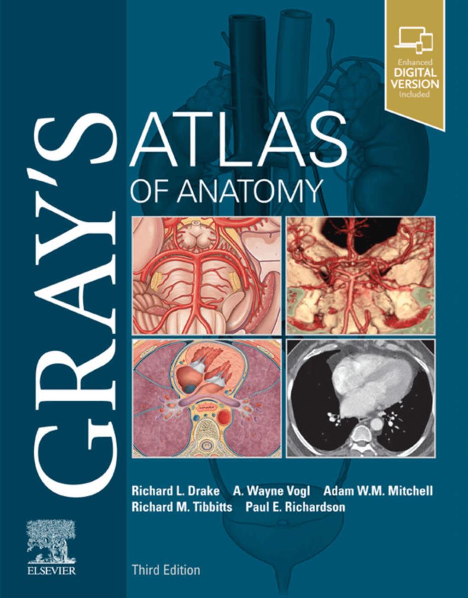دانلود pdf اطلس آناتومی گری