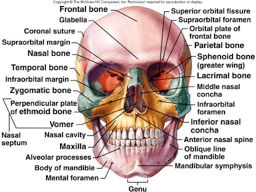آناتومی،آنومالی و جراحیهای کرانیوفیشیال